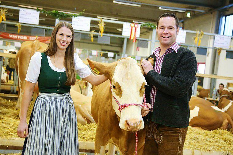 PRO TIER  / Cattle