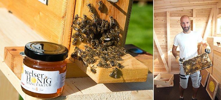 Die Welser Honig Biene kennenlernen