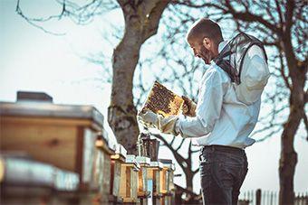 Welser Honigmanufaktur