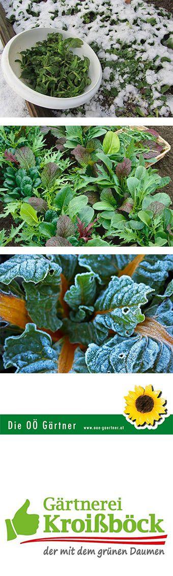 Frische Vitamine für die kalte Jahreszeit